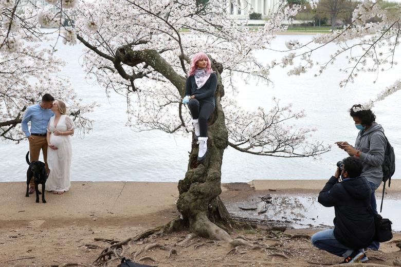 Priyanka Kaswan poses for a photo while sitting on a cherry tree at the Tidal Basin near the National Mall in Washington, March 31, 2021. REUTERS/Tom Brenner