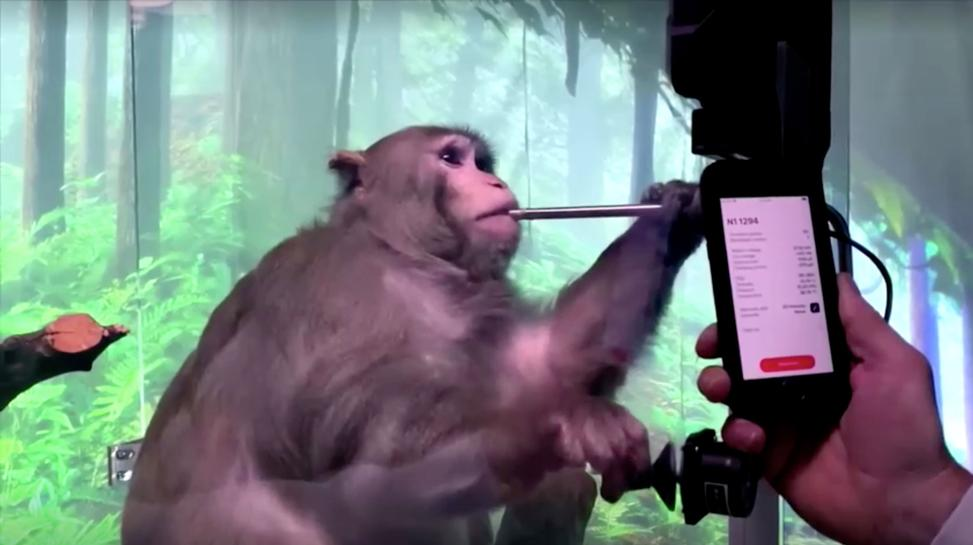 Elon Musk's Neuralink shows monkey with brain-chip playing videogame by thinking | Reuters
