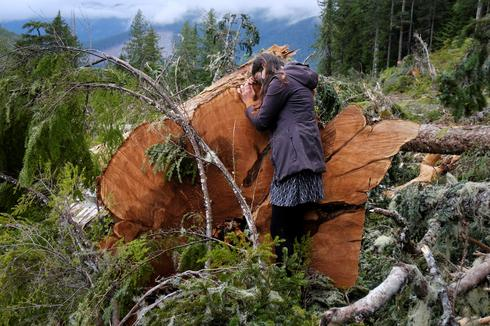 The battle over Western Canada's ancient forests at Fairy Creek