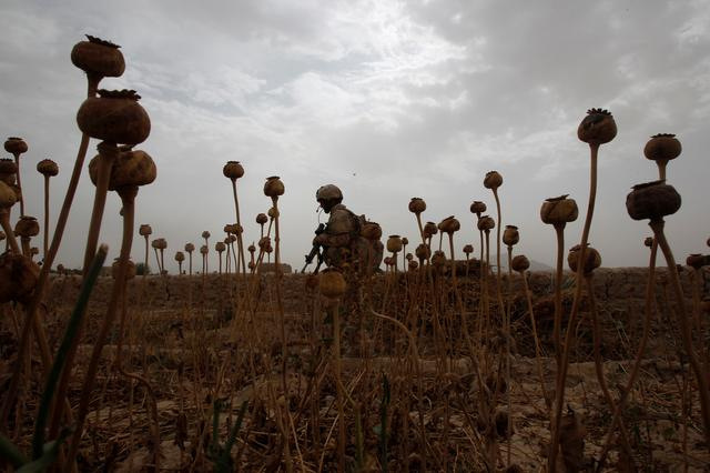 FILE PHOTO: A Canadian soldier from the 6th Platoon, Bulldog Company, 1st Battalion, 22nd Royal Regiment walks through a poppy field during a patrol in the Panjwai district of Kandahar province southern Afghanistan June 13, 2011. REUTERS/Baz Ratner/File Photo