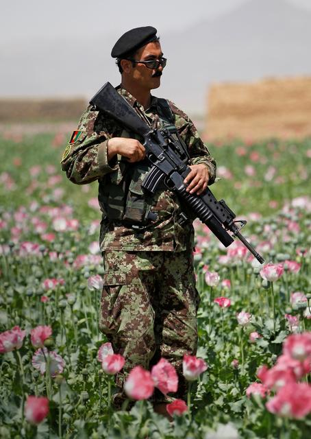 FILE PHOTO: An Afghan National Army soldier stands in a poppy field during a patrol through the village of Jelawar in the Arghandab Valley north of Kandahar April 18, 2011.  REUTERS/Bob Strong/File Photo